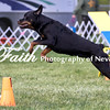 Agility ARC Nationals May 15 2017MelissaFaithKnightFaithPhotographyNV_6771