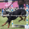Agility ARC Nationals May 15 2017MelissaFaithKnightFaithPhotographyNV_7002