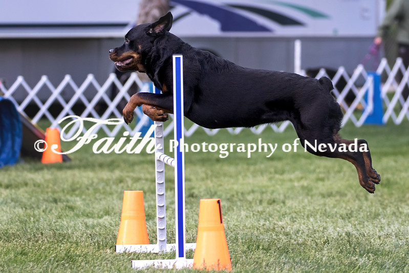 Agility ARC Nationals May 15 2017MelissaFaithKnightFaithPhotographyNV_6777