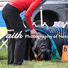 Agility ARC Nationals May 15 2017MelissaFaithKnightFaithPhotographyNV_6975