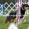 Agility ARC Nationals May 15 2017MelissaFaithKnightFaithPhotographyNV_6908