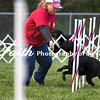 Agility ARC Nationals May 15 2017MelissaFaithKnightFaithPhotographyNV_6832