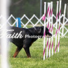 Agility ARC Nationals May 15 2017MelissaFaithKnightFaithPhotographyNV_6958