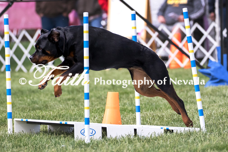 Agility ARC Nationals May 15 2017MelissaFaithKnightFaithPhotographyNV_7000