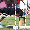 Agility ARC Nationals May 15 2017MelissaFaithKnightFaithPhotographyNV_6999