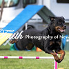 Agility ARC Nationals May 15 2017MelissaFaithKnightFaithPhotographyNV_6778