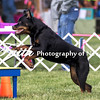 Agility ARC Nationals May 15 2017MelissaFaithKnightFaithPhotographyNV_6763