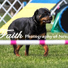 Agility ARC Nationals May 15 2017MelissaFaithKnightFaithPhotographyNV_6963