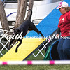 Agility ARC Nationals May 15 2017MelissaFaithKnightFaithPhotographyNV_6808