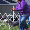 Agility ARC Nationals May 15 2017MelissaFaithKnightFaithPhotographyNV_6611