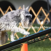 Agility ARC Nationals May 15 2017MelissaFaithKnightFaithPhotographyNV_6641