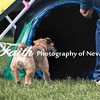 Agility ARC Nationals May 15 2017MelissaFaithKnightFaithPhotographyNV_6683