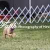 Agility ARC Nationals May 15 2017MelissaFaithKnightFaithPhotographyNV_6688