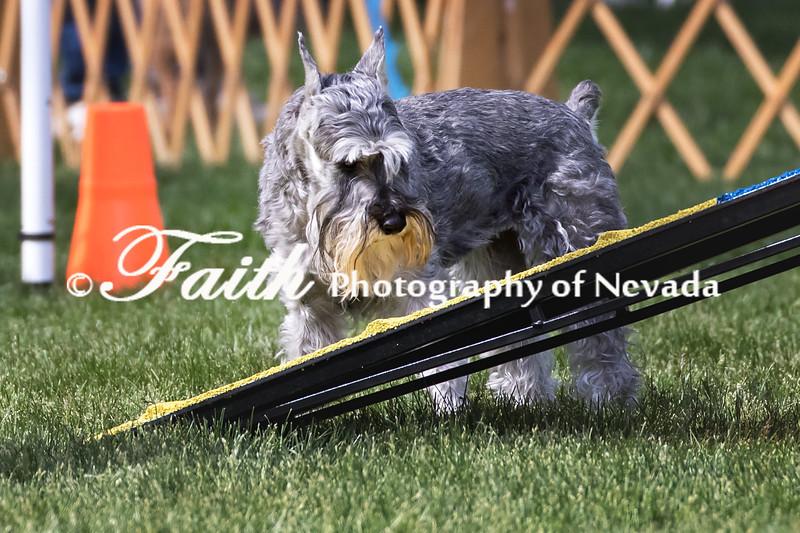 Agility ARC Nationals May 15 2017MelissaFaithKnightFaithPhotographyNV_6640