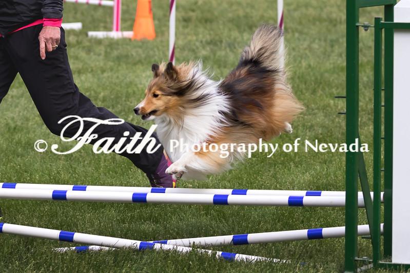 Agility ARC Nationals May 15 2017MelissaFaithKnightFaithPhotographyNV_7102