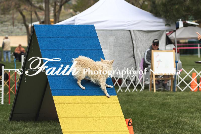 Agility ARC Nationals May 15 2017MelissaFaithKnightFaithPhotographyNV_7149