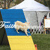 Agility ARC Nationals May 15 2017MelissaFaithKnightFaithPhotographyNV_7149