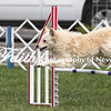 Agility ARC Nationals May 15 2017MelissaFaithKnightFaithPhotographyNV_7164