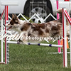 Agility ARC Nationals May 15 2017MelissaFaithKnightFaithPhotographyNV_7220