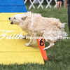 Agility ARC Nationals May 15 2017MelissaFaithKnightFaithPhotographyNV_7133