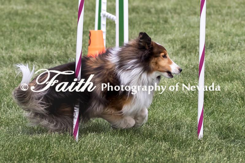 Agility ARC Nationals May 15 2017MelissaFaithKnightFaithPhotographyNV_7238