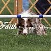 Agility ARC Nationals May 15 2017MelissaFaithKnightFaithPhotographyNV_7172