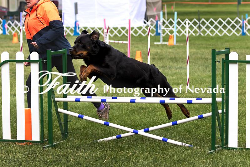 Agility ARC Nationals May 15 2017MelissaFaithKnightFaithPhotographyNV_7319