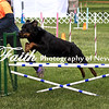 Agility ARC Nationals May 15 2017MelissaFaithKnightFaithPhotographyNV_7319
