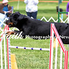 Agility ARC Nationals May 15 2017MelissaFaithKnightFaithPhotographyNV_7666