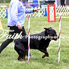 Agility ARC Nationals May 15 2017MelissaFaithKnightFaithPhotographyNV_7656