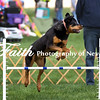 Agility ARC Nationals May 15 2017MelissaFaithKnightFaithPhotographyNV_7284