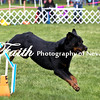 Agility ARC Nationals May 15 2017MelissaFaithKnightFaithPhotographyNV_7298