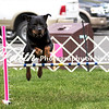 Agility ARC Nationals May 15 2017MelissaFaithKnightFaithPhotographyNV_7664