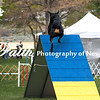 Agility ARC Nationals May 15 2017MelissaFaithKnightFaithPhotographyNV_7329