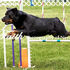 Agility ARC Nationals May 15 2017MelissaFaithKnightFaithPhotographyNV_7658