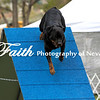 Agility ARC Nationals May 15 2017MelissaFaithKnightFaithPhotographyNV_7296