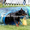 Agility ARC Nationals May 15 2017MelissaFaithKnightFaithPhotographyNV_7654