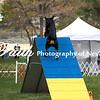 Agility ARC Nationals May 15 2017MelissaFaithKnightFaithPhotographyNV_7330