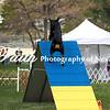 Agility ARC Nationals May 15 2017MelissaFaithKnightFaithPhotographyNV_7330
