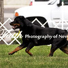 Agility ARC Nationals May 15 2017MelissaFaithKnightFaithPhotographyNV_7357