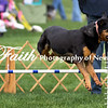 Agility ARC Nationals May 15 2017MelissaFaithKnightFaithPhotographyNV_7282