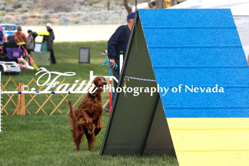 Agility ARC Nationals May 15 2017MelissaFaithKnightFaithPhotographyNV_7360