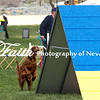 Agility ARC Nationals May 15 2017MelissaFaithKnightFaithPhotographyNV_7360
