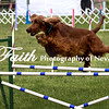 Agility ARC Nationals May 15 2017MelissaFaithKnightFaithPhotographyNV_7376