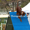 Agility ARC Nationals May 15 2017MelissaFaithKnightFaithPhotographyNV_7363