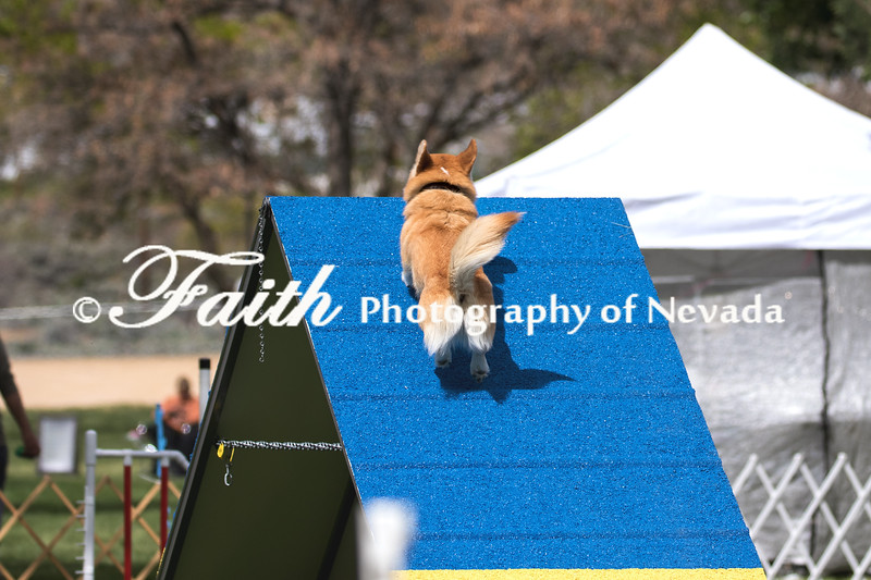Agility ARC Nationals May 15 2017MelissaFaithKnightFaithPhotographyNV_7072