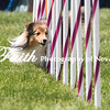 Agility ARC Nationals May 15 2017MelissaFaithKnightFaithPhotographyNV_7924