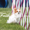 Agility ARC Nationals May 15 2017MelissaFaithKnightFaithPhotographyNV_7813