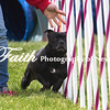Agility ARC Nationals May 15 2017MelissaFaithKnightFaithPhotographyNV_7966
