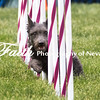 Agility ARC Nationals May 15 2017MelissaFaithKnightFaithPhotographyNV_7851